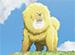 チベット犬物語〜金色のドージェ〜