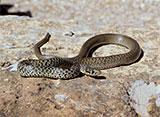 ヘビの美貌
