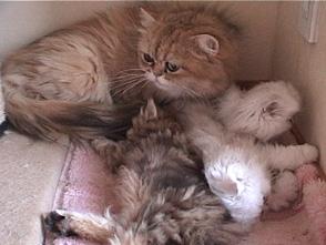 Cat Healing ねこちゃんといっしょ #1 こねこ なごみ編