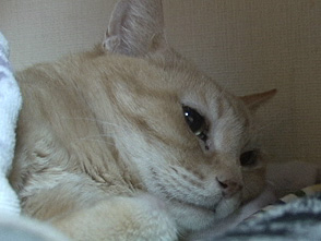 Cat Healing ねこちゃんといっしょ #7 こねこ おねんね編