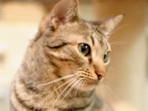 Cat Healing �ͤ������Ȥ��ä��硡��10 ���ͤ������Ѥ���