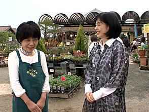 手づくり花づくり #974『和鉢が似合うギボウシ』