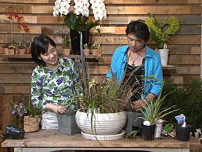 手づくり花づくり #1031「流線型の植物の生かし方」