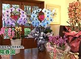 手づくり花づくり #1072「今年贈りたいランのギフト」