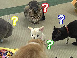 いきいき動物ビデオ 2巻