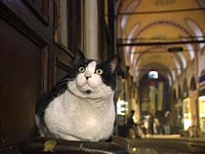 """猫、大好き! BGV""""にゃんにゃん""""シアター"""