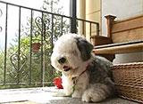 犬、大好き! 大活躍!スイスのレンタドッグ