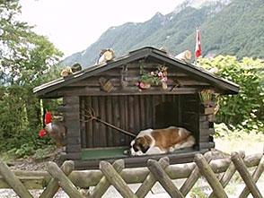 犬、大好き! キャンプ場の人気者!セントバーナード