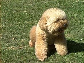 犬、大好き! ドッグヘアサロンは大忙し!