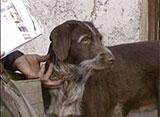 犬、大好き! 南フランス犬の郵便屋さん