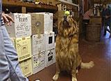 犬、大好き! ワインショップの看板犬