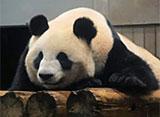 上野動物園の世界 プロローグ