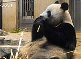 上野動物園の世界 世界三大珍獣