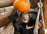 上野動物園の世界 アジアの動物