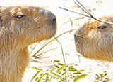 上野動物園の世界 南アメリカの動物