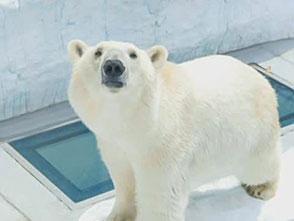 上野動物園の世界 北極圏の動物