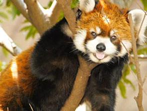 上野動物園の世界 まだまだいるよ!仲間たち