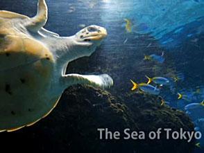 葛西臨海水族園の世界 プロローグ