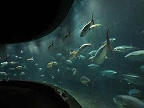 葛西臨海水族園の世界 大洋の航海者