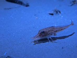 葛西臨海水族園の世界 深海の生物