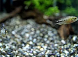 熱帯魚映像図鑑 オープニング