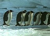 ペンギン・シアター オープニング