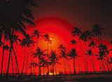 Hawaiian Express オアフ島 究極の癒し
