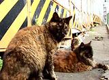 路地猫 シタマチ ロジネコ