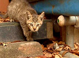 路地猫 ロジネコ サバービア