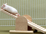 猫のためのテレビ ハツカネズミ