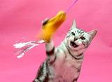 猫のためのテレビ 遊ぶネコ