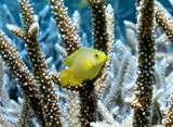 海の森林浴 サンゴの楽園(石垣島)
