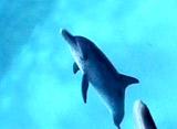 海からのメッセージ 魚の特徴観察 行動編
