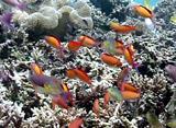 海からのメッセージ 魚の特徴観察 色と模様編