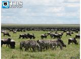 TBSオンデマンド「地球絶景紀行 果てしない平原 セレンゲティ国立公園(タンザニア)」