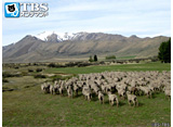 TBSオンデマンド「地球絶景紀行 星空の村テカポ(ニュージーランド)」