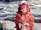 ウルトラマン 第8話 怪獣無法地帯