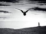 ウルトラQ 第12話 鳥を見た