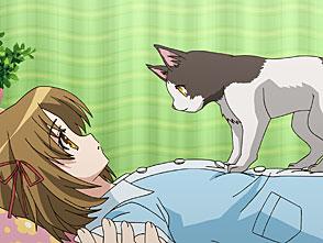 おまもりひまり 第8話 Curiosity killed the cat