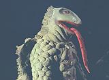 ウルトラマンレオ 第44話 恐怖の円盤生物シリーズ! 地獄から来た流れ星!