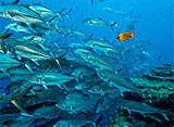 キングダム・オブ・オーシャンズ vol.3 サンゴ礁の住人たち