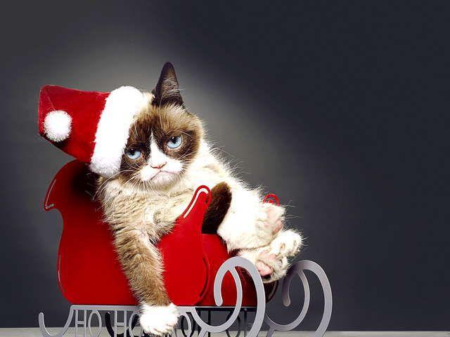 グランピーキャットの最低で最高のクリスマス