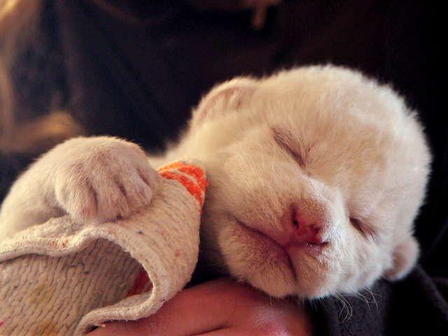 アニマル・ベイビーズ 動物園で生まれた赤ちゃん
