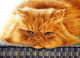 にゃんこを追って〜全米横断の旅〜 スター猫