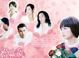 「薔薇之恋〜薔薇のために〜 第31話〜第41話」14days パック