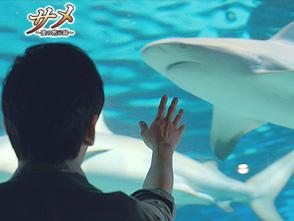 サメ〜愛の黙示録〜 第4話