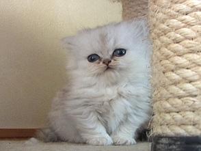 Cat Healing ねこちゃんといっしょ #2 こねこ こねこ編