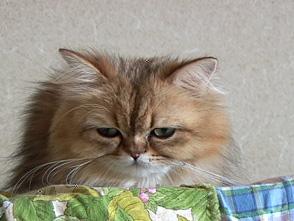 Cat Healing ねこちゃんといっしょ #4 こねこ おやすみ編