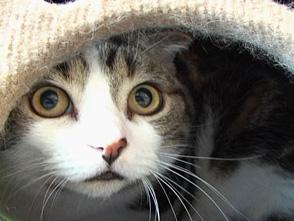 Cat Healing ねこちゃんといっしょ #5 こねこ なかま編