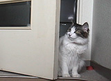 Cat Healing ねこちゃんといっしょ #6 こねこ やんちゃ編